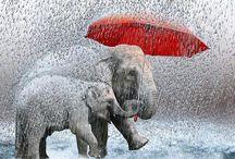 Elephants / by Sage Mckee