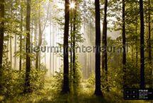 Fotobehang bossen/ forest / Rustgevend fotobehang van bossen en bomen