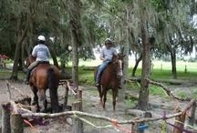 Horse games etc