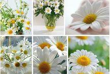 Blühendes und Zartes