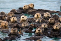 Otters...love them