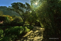 South Africa / Photographs from my 2012 South Africa trip. Enjoy!