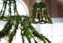 moss uses ideas