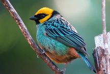 Birds Color Scheme