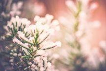 Erbe aromatiche estive