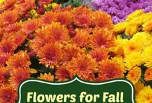 Autumn Flowers and Plants / Flowers and plants that are perfect for indoor and outdoor decorating.  This board also features bulbs to be planted during Fall for the following Spring.