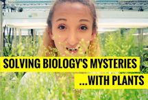 Solving Biology's Mysteries With Plants / MIT resources related to our episode on how plants are used and studied in systems biology and materials research