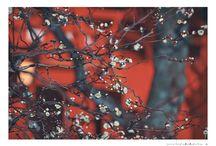 color of kyoto / photo by mochizukikaoru
