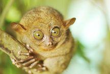 Other Animals - Primates