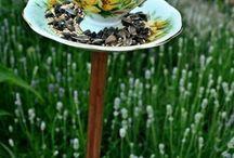 Birdfeeders / by Dot Blankenship Long