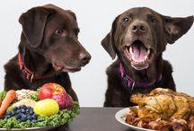 Sir Oliver Pet / Sir Oliver Pet è un Blog che nasce con l'intento di fare un po' di chiarezza sul mondo degli animali da compagnia più diffusi e amati, i Cani e i Gatti.