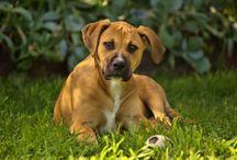 Reggie / my puppy