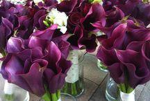 Lover of Purple