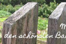 Fotowettbewerb Die schönsten Bauerngärten / Der Wettbewerb ist beendet. Aber es gibt noch schöne Ideen und Inspirationen auf den Fotos. photo contest beautiful cottage garden ideas