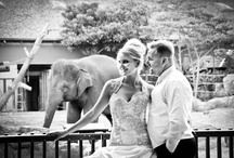 Weddings - Location Photos / Location wedding photography is a great celebration of a marriage and make great photos to have for the future. Sydney spoils couples for choice. / by Pierre Mardaga
