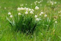 Frühlingsanfang: Ausflugsziele in Deutschland / Der astronomische Frühlingsanfang am 20. März ist der perfekte Anlass, um einen Ausflug zu planen. Raus in die Natur und nach dem langen Winter Kraft tanken: Wir stellen zehn der schönsten Ziele vor, um den Frühling zu begrüßen.
