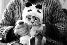 Cats / by Fresh Dog®