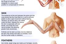 Anatomy of an angels