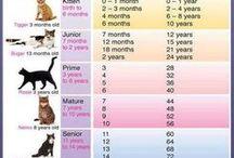 despre pisici