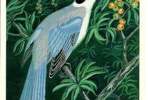 Birds - Vintage Postcards