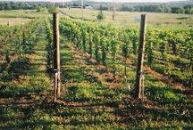 Bucket List - Visit a winery in every state / by Stephanie Weiand