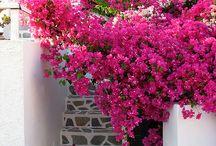 Gardening  / by Michele Burnett