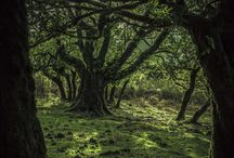 Wald, Wiesen und Auen
