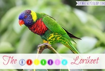 Birds / Beautiful shots of different types of birds from all over the world.