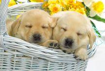 Animaux / Ses tellement minigon  d'avoir 2 petit chien comme ça bisous