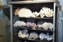 Decor: Coral