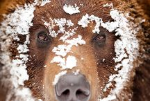 Bear Witness....Pandamoneum