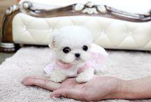 Dear Puppies!!!!!!