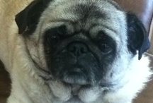 Puggy Wuggies