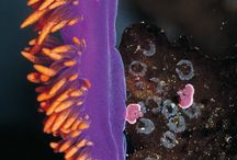 Nudibranch and other marine creatures I love