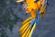 beautiful flying