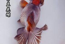 Fancy gold fish / One of my favorite fishes fancy goldfish #ranchu #pandamoor #oranda #celestialeye #bubbleeye #pearscale #redcap http://giobelkoicenter.com/goldfish-types/