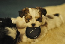 Too Cute! / Adorable animals / by Christina Marie
