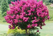 arbres fleurs plantes potager