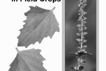 Weeds & Invasives in the Garden / How to identify, prevent, and organically manage plants growing where we don't want them in our gardens.