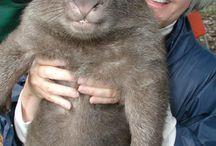 divertido / by Marmot marsupial