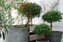 Indoor Planting / by Leela Brown