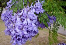 ref: flora