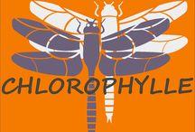 #6 Chlorophylle / Votre paysagiste Chlorophylle est à votre service depuis 1985.   Sur rendez-vous, nous pouvons vous recevoir dans notre jardin d'exposition.   En tant que conseiller paysagiste, nous concevrons et réaliserons votre jardin en alliant divers éléments.