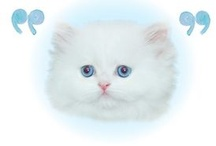 "Cat Love / ""Beware of people who dislike cats."" - Irish proverb"