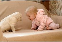 babies and dogs / by Mary Bramos