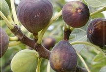 Fruit trees...!!