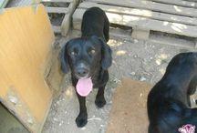 Σκυλιά - Αγγελίες Υιοθεσίας - Adespoto.gr / Αγγελίες υιοθεσίας / απώλειας ζώων
