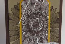 SU Sunflower