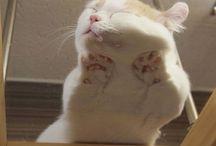 cat's <3