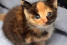 Kitties<3